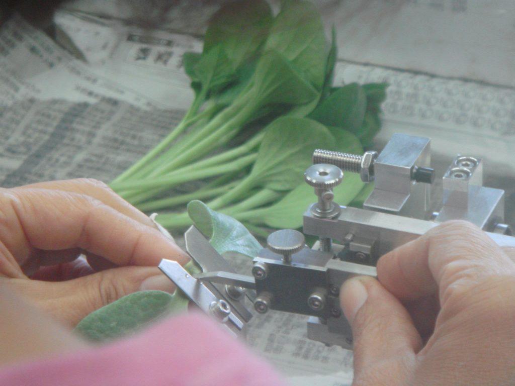 接ぎ木苗生産とAI