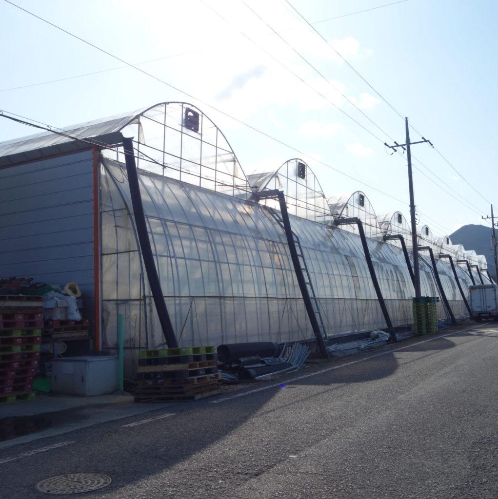 韓国のトマト施設栽培の状況